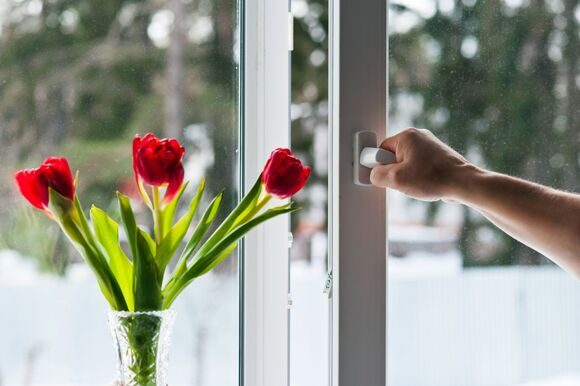 window with tulips